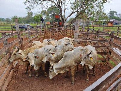 Fiscalía investigará a Senacsa tras robo de ganado en el Chaco
