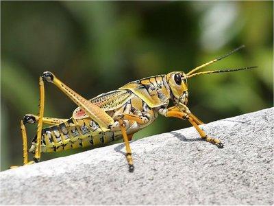 Un estudio defiende el valor nutritivo de algunos insectos