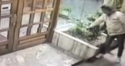 Roba una plantita y escapa en auto de alta gama (video)