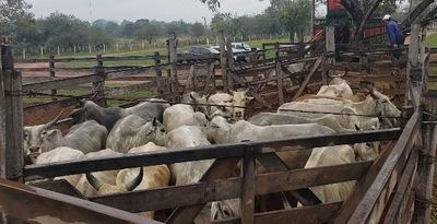 Hallan tercer camión con ganado vacuno robado