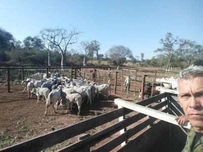 Recuperan tercer camión de ganado robado en el cuádruple homicidio