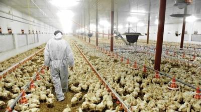 """Sector aviar podría """"volar"""" a Europa"""