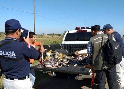 Aumenta venta de pescados sin las  medidas establecidas