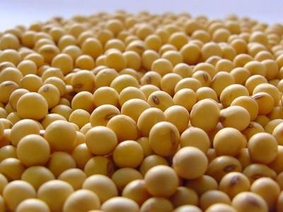 Exportamos 4 millones de toneladas de soja