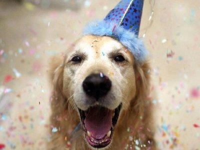 Es día de homenajear al fiel amigo del hombre: el perro