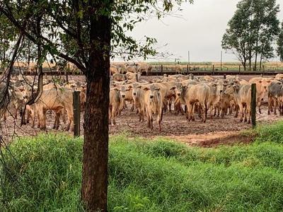 Industrias frigoríficas faenaron 121 mil bovinos menos hasta junio