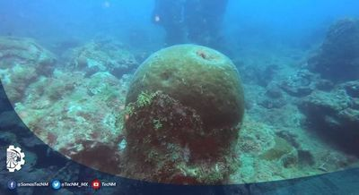 Investigadores hallan cinco nuevos arrecifes en el Golfo de México