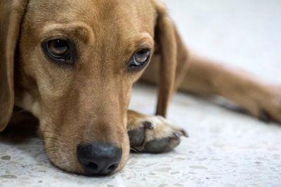 Un perro asiste a un juicio como víctima de maltrato