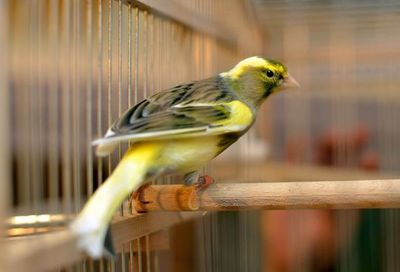 Pájaros en casa: claves para aumentar su esperanza de vida