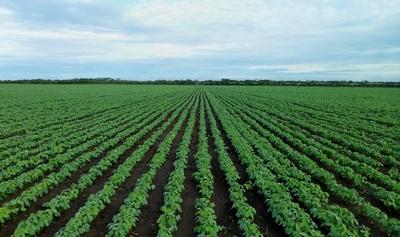 Argentina, Brasil, Paraguay y Uruguay van a OMC por comercio biotecnológico