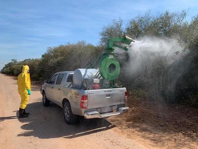 Senave busca controlar focos de langostas con aplicación de pesticidas