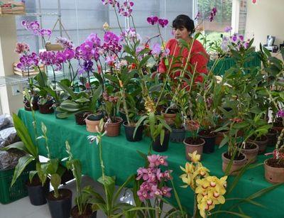 Feria de orquídeas por el Día de la Amistad