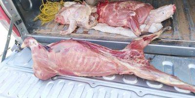 VILLA HAYES: MADES DECOMISA PIEZAS DE ANIMALES SILVESTRES