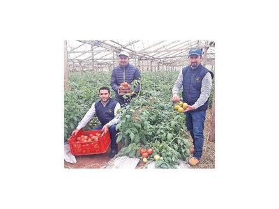 Preparan la 1ª Expo Tomate en Misiones