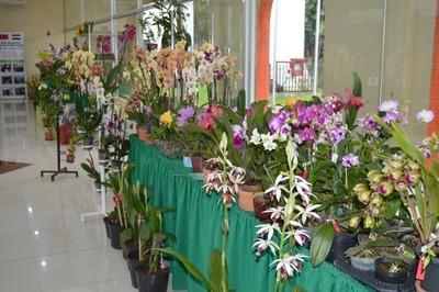 Feria de orquídeas en conmemoración por el Día de la Amistad