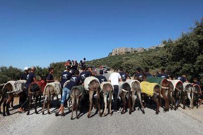 Festival de burros en Marruecos