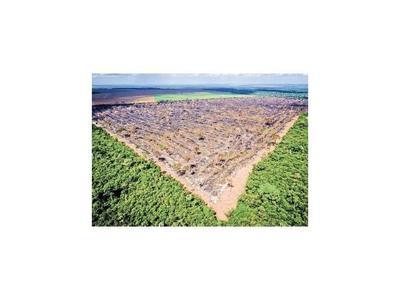 La UE advierte al Mercosur que la deforestación amenaza el acuerdo