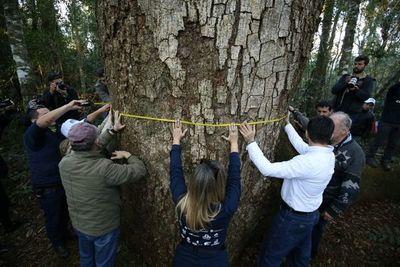 """Buscan al """"coloso"""" en el Parque Nacional Caazapá"""