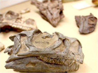 Hallan nuevo tipo de dinosaurio con un fósil mal identificado