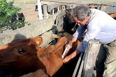 Este viernes termina periodo de vacunación en el Chaco