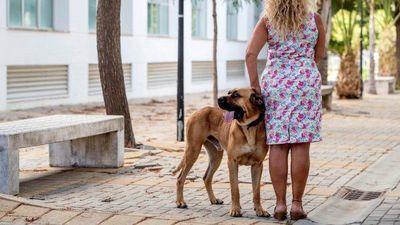 Los perros, aliados de las víctimas de violencia machista en España