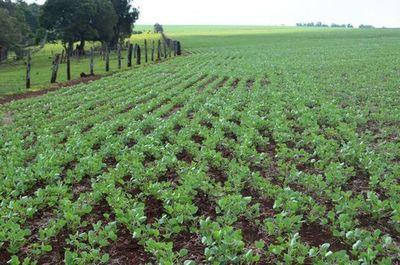 Proseguir con una agricultura conservacionista