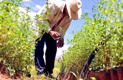 Pretenden aumentar envíos de productos orgánicos a Corea