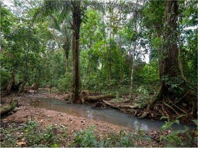Preservar bosques tropicales para mitigar la crisis climática