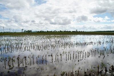 Por qué el informe del USDA genera más volatilidad en el mercado de granos
