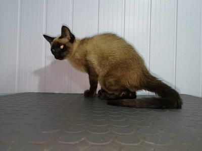 Denuncian que una gatita fue abusada sexualmente