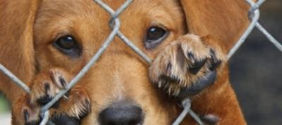 Día Internacional del Animal Sin hogar: ¿Qué puedes hacer tú para ayudarlos?
