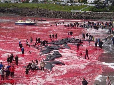 Bolsonaro se equivoca con caza de ballenas y la red ríe