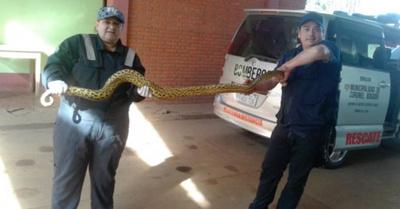 """""""Las serpientes son como nuestras amigas"""", he'imi"""