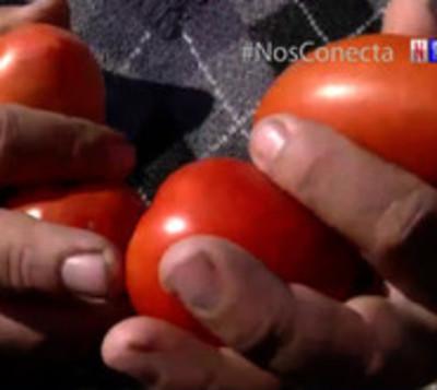 Horticultores siguen marchando en busca de mayor asistencia