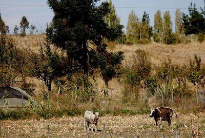 Chile extiende decreto de emergencia agrícola a varias zonas del país