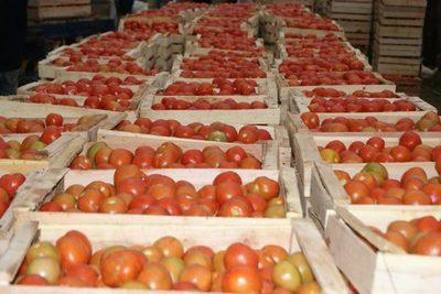 Ferias de tomates también en San Lorenzo