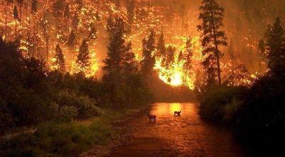 Incendios amazónicos en Brasil suman rechazo contra Jair Bolsonaro