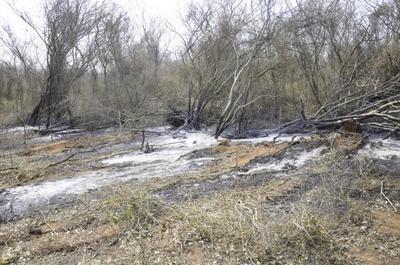 Gobierno reforzará controles para proteger al Pantanal Paraguayo de incendios forestales