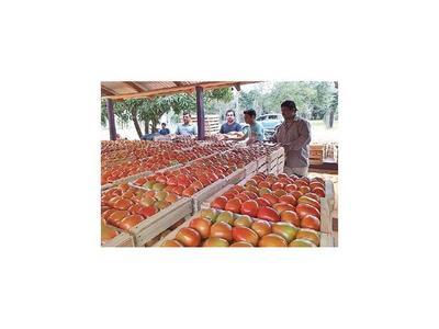 Productores de Oviedo  envían   las primeras 10 toneladas de tomate