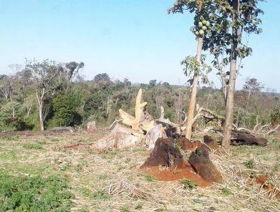 Destruyen bosque de comunidad indígena