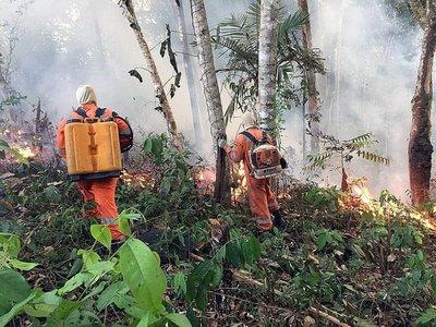 Ecuador ofrece ayuda a Brasil para lucha contra incendios en Amazonía