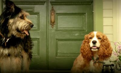 """HOY / Disney halla en una perrera a su """"vagabundo"""" de la nueva """"Lady and the Tramp"""""""