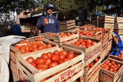 Éxito rotundo en feria de tomates: 12.000 kilos vendidos en un sólo día