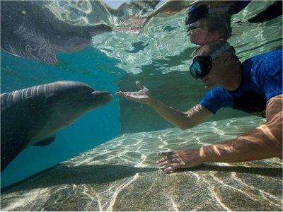 Activistas piden liberación de delfines de parques SeaWorld