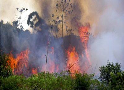 Los incendios forestales en la Amazonia ennegrecen el sol de San Pablo