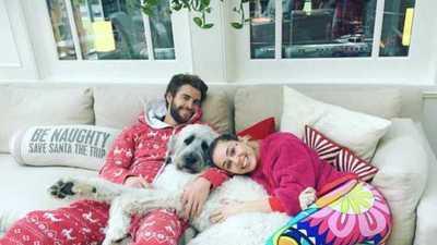 Miley Cyrus se quedará con todas las mascotas cuando se divorcie