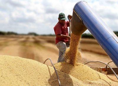 El precio de la soja vuelve a caer en el mercado de Chicago