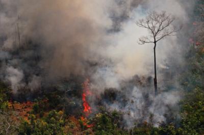 Millones de dólares para reforestar la Amazonía