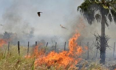 Piden denunciar a quienes queman pastizales