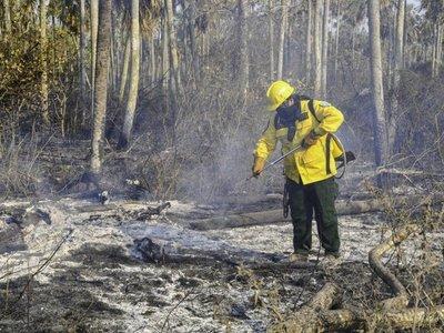 Preguntas y respuestas sobre los incendios que acechan a Amazonía